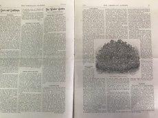 画像5: 1883年 THE AMERICAN GARDEN 農業系雑誌 (5)