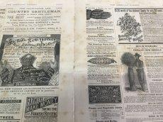 画像7: 1883年 THE AMERICAN GARDEN 農業系雑誌 (7)