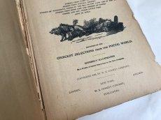 画像4: 1895年 アンティーク BOOK POPULAR ENTERTAINMENTS (4)