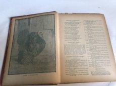 画像6: 1895年 アンティーク BOOK POPULAR ENTERTAINMENTS (6)